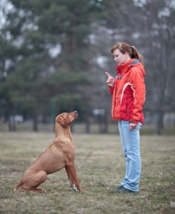Astuces pour dresser un chien
