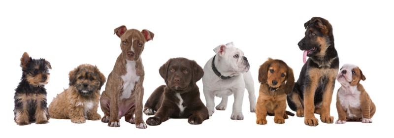 les chiens et l'éducation